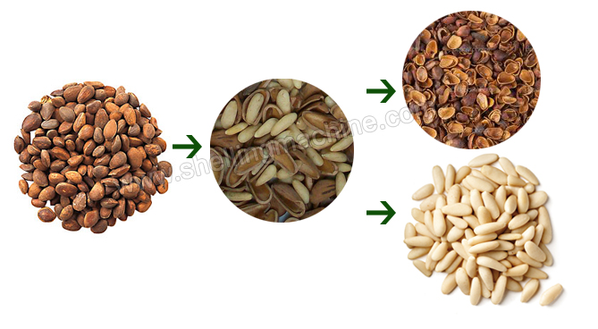 pine nuts shelling process