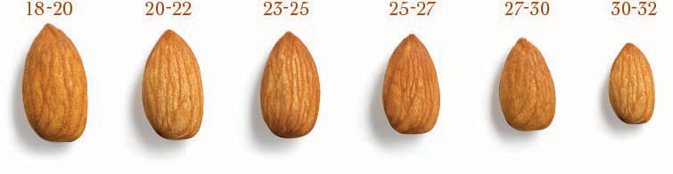 Australian_Almonds_Sizes