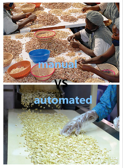 manual_vs_automated_cashew_processing