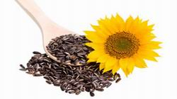 Is It Safe to Eat Sunflower Seeds Whole?