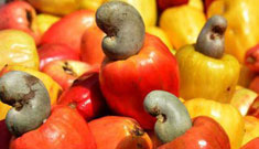 How to Promote Zambia Cashew Nut Industry